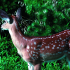 Fawn whitetail deer. Image/Lynn Betts, USDA Natural Resources Conservation Service.