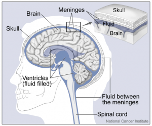 Brain and CSF/NIH