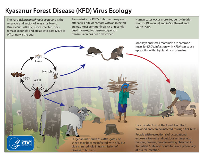 Kyasanur Forest disease/CDC