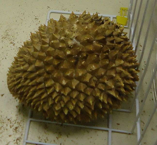 Durian fruit/Public domain image by Tomwsulcer