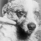 """Close-up of a dog's face during late-stage """"dumb"""" paralytic rabies/CDC"""