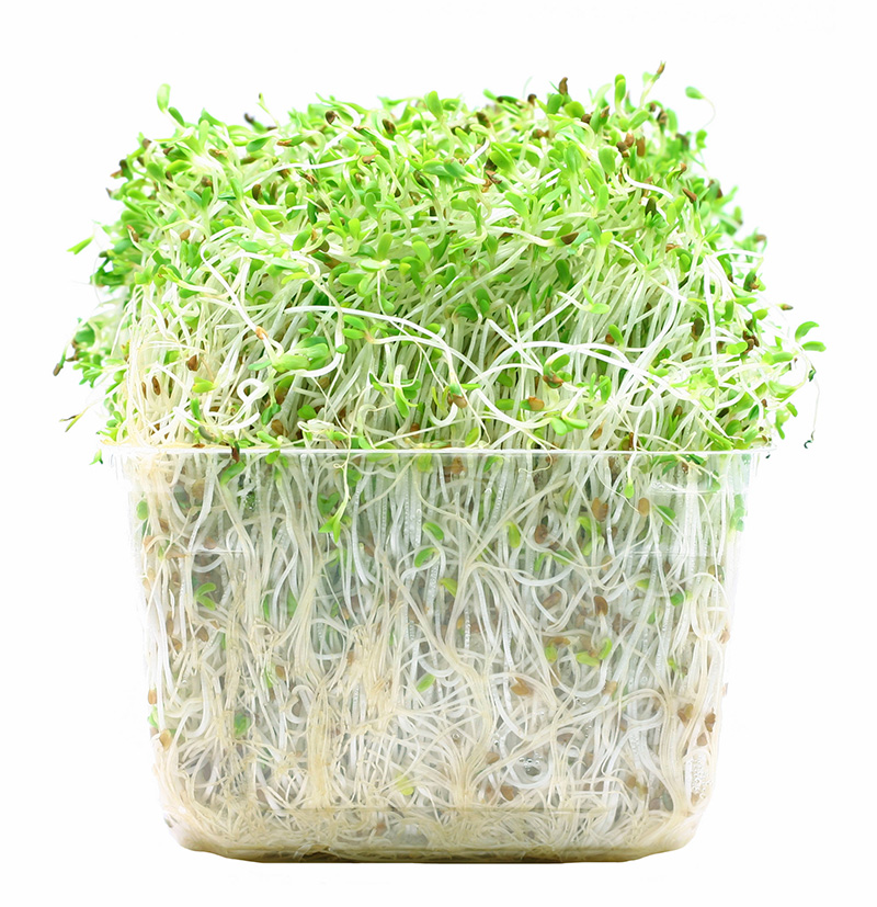 Image of alfalfa sprouts/CDC