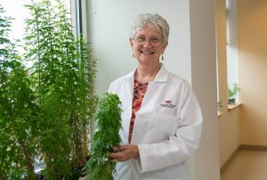 Pamela Weathers, professor of biology and biotechnology at Worcester Polytechnic Institute (WPI), with Artemisia annua plants. Weathers is a leader in the development of therapies for malaria using only dried leaves from the plant. Her research has shown that these therapies are more effective and less expensive than standard malaria medications. Image/WPI
