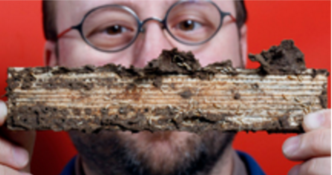 Michael Scharf, O.W. Rollins/Orkin Chair in Molecular Physiology and Urban Entomology, is developing technology that could provide an effective way to control and eliminate termites Image/Purdue