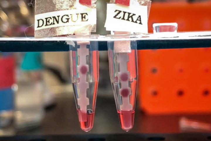 """""""It's important to have a single test that can differentiate between the four serotypes of Dengue and Zika, because they co-circulate. They're spread by the same mosquito,"""" says Kimberly Hamad-Schifferli, an associate professor of engineering at the University of Massachusetts at Boston and a visiting scientist in MIT's Department of Mechanical Engineering. Image/Courtesy of the researchers"""