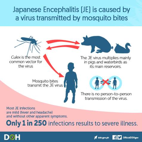 One Thought On Japanese Encephalitis Cases Rise To A Dozen In Taiwan