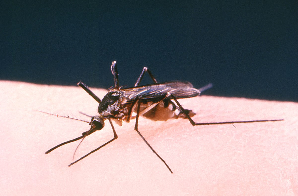 Hebron mosquitos test positive for West Nile Virus