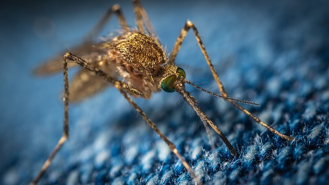 Mosquito-borne virus spreads to New Jersey with two more confirmed cases
