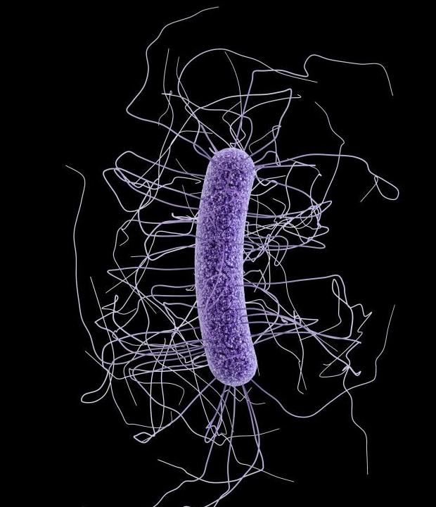 Clostridium difficile Image/CDC