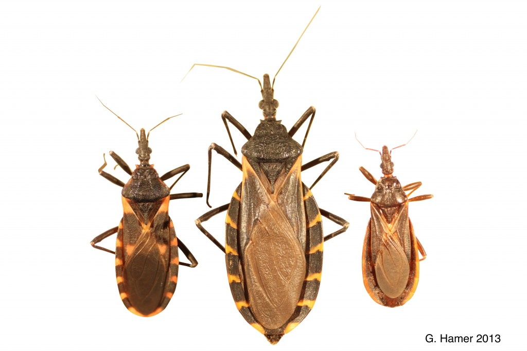 Chagas disease