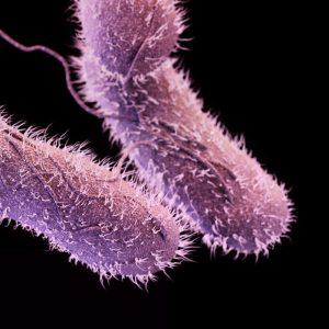 Salmonella/CDC