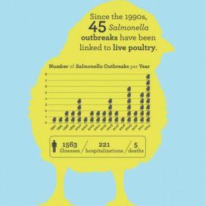 Salmonella chicks/CDC