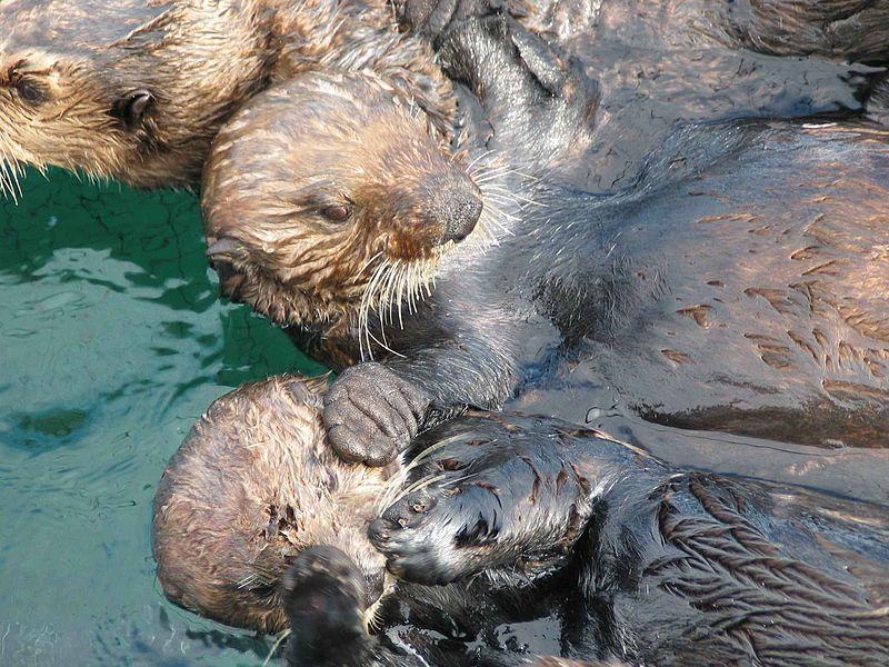 Image/Verna Gill and Angela Doroff, U.S. Fish and Wildlife Service