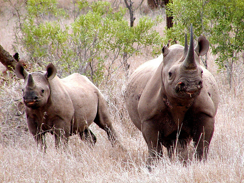 Rhinoceros/  U.S. Fish and Wildlife Service