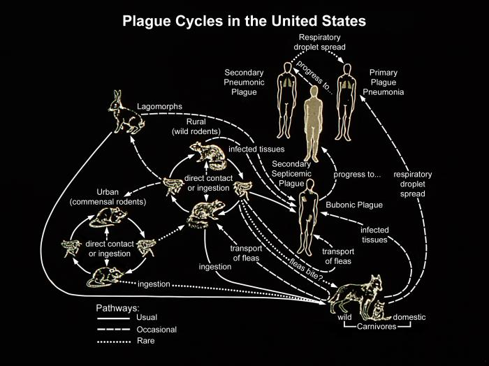 Plague in the US/CDC