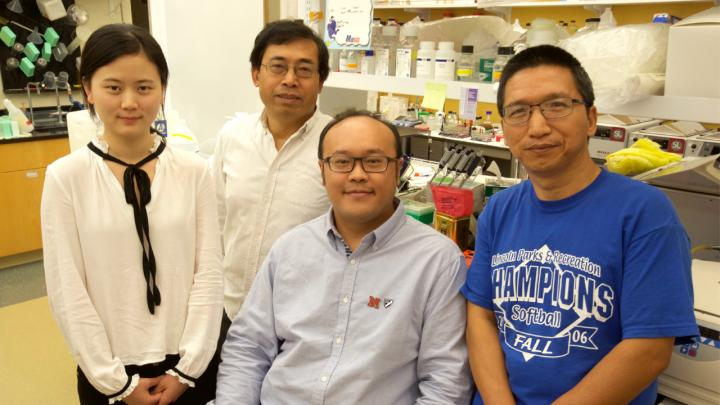 University of Nebraska-Lincoln scientists led a study that reports the first in vivo evidence that strains of chimpanzee-carried simian immunodeficiency virus can infect human cells. From left, Wenjin Fan, Qingsheng Li, Zhe Yuan and Guobin Kang. Li is an associate professor of biological sciences at UNL, Fan and Yuan are doctoral students and Kang is a research technologist. Image/University Communications|University of Nebraska-Lincoln
