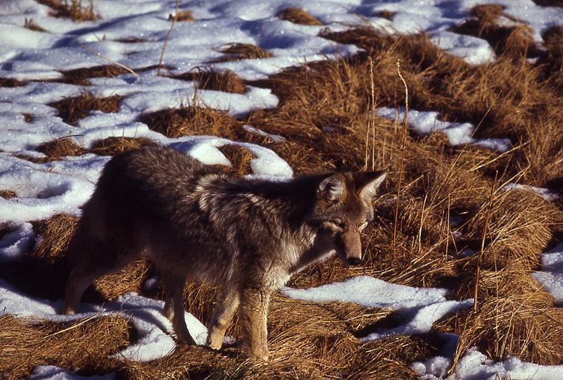 Image/National Park Service
