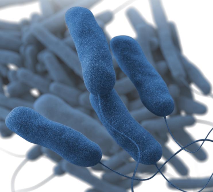 Legionella bacteria Image/CDC