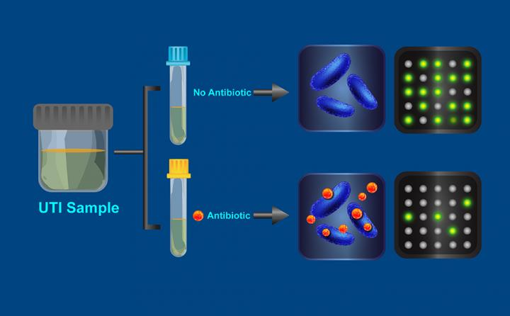 A visualization of how the antibiotic resistance test works. Image/Caltech