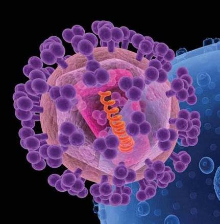 An artist's rendition of HIV (foreground). The knobs (purple) covering the virus are sugar-protein molecules, including gp120, that shield the rest of the virus (pink). Image/National Cancer Institute