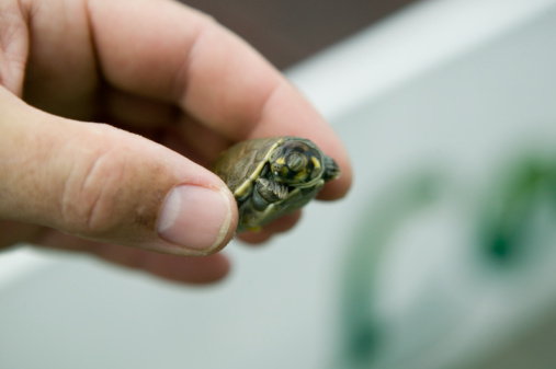 Man holding small tortoise, close-up/CDC