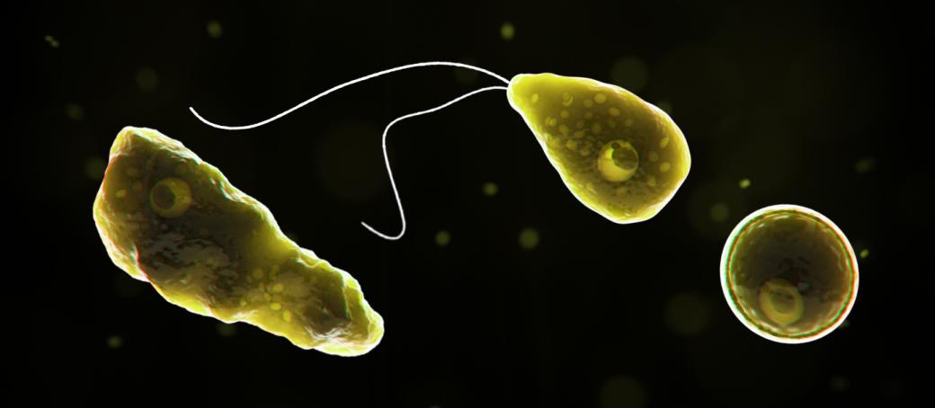 Naegleria fowleri Image/CDC